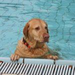 Hundeschwimmen2019